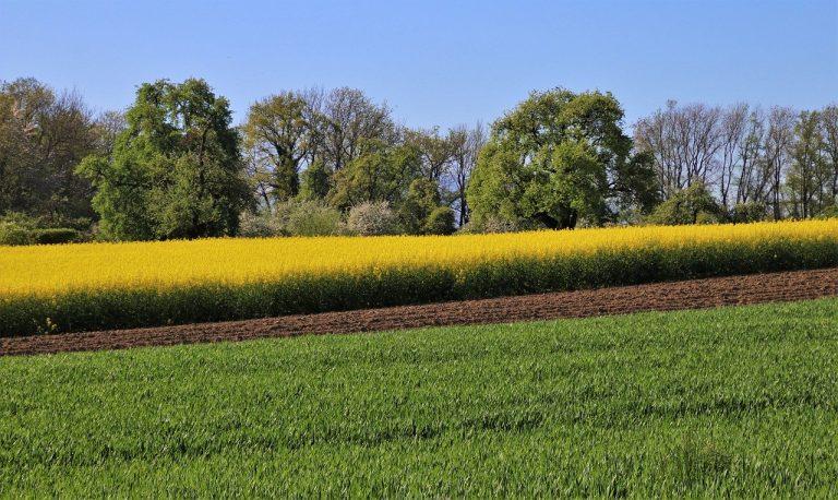 Środki ochrony roślin od sprawdzonych producentów