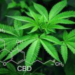 Jakie zalety posiada medyczna marihuana?